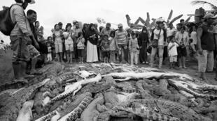 Los residentes locales observan los cadáveres de cientos de cocodrilos de una granja después de que fueron asesinados por enojados lugareños tras la muerte de un hombre que murió en un ataque de cocodrilo en la regencia de Sorong, Papúa Occidental, Indonesia 14 de julio de 2018