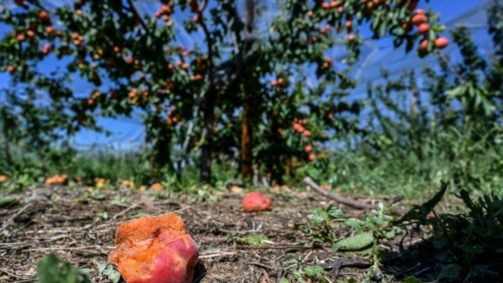 Heavy toll for French farms and vineyards after brutal hailstorm