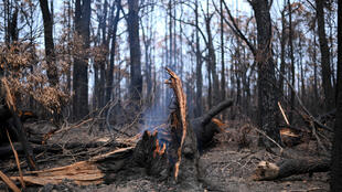 A smouldering tree is seen following bushfires in Budgong National Park in New South Wales on January 15, 2020. The confirmed death toll rose to 28 on January 15, as the fires have already destroyed more than 2,000 homes and burnt 10 million hectares (100,000 square kilometres) of land -- an area larger than South Korea or Portugal.
