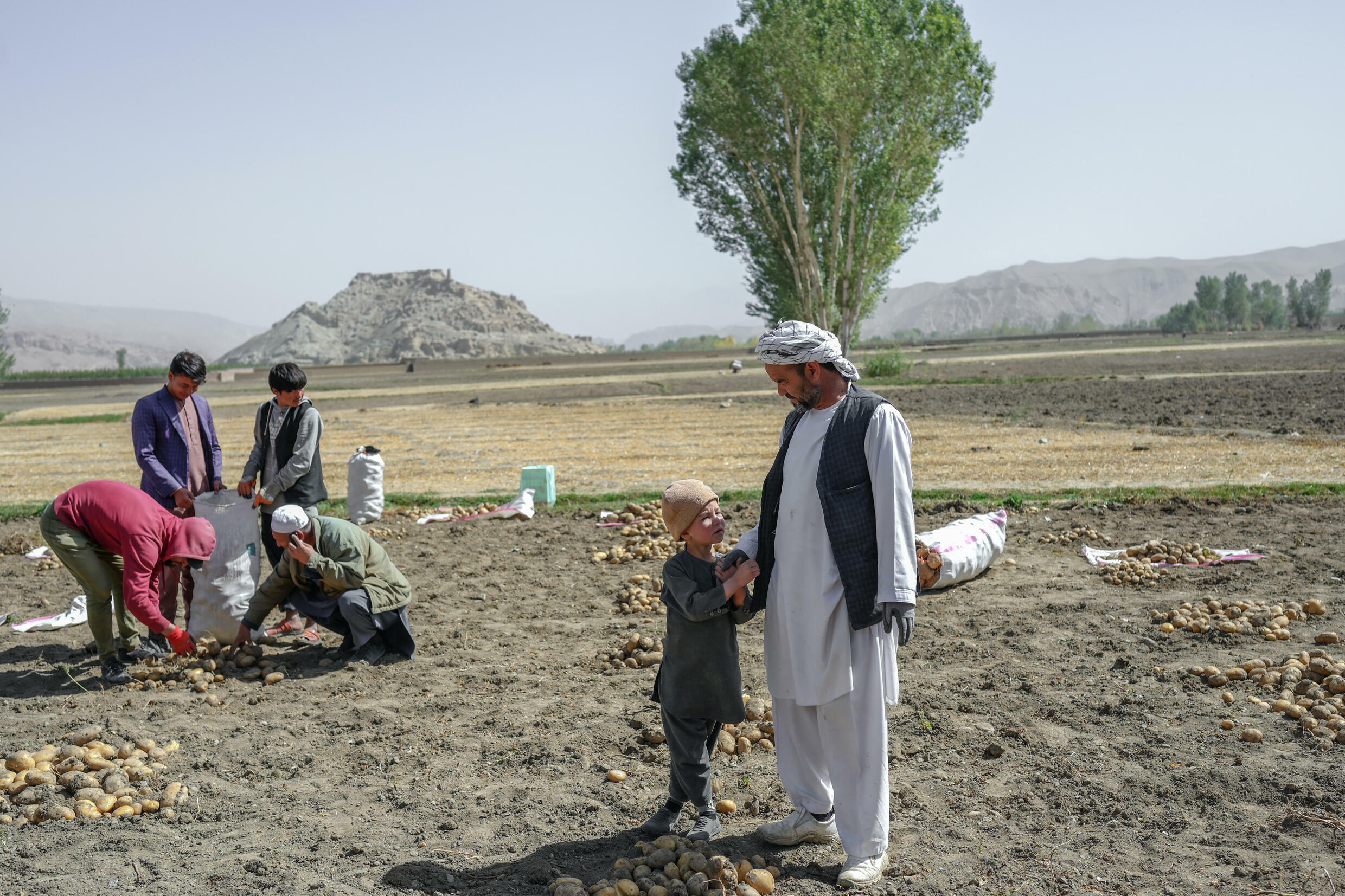 The Hazaras make up up to a fifth of the Afghan population