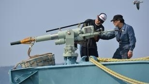 """Japan is proposing a """"Way Forward"""" package which envisages a twin-track future of conservation and commercial whaling which would be managed by a new """"Sustainable Whaling Committee"""""""