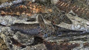 صورة لجانب من المستحاثات المكتشفة بداكوتا الشمالي 30 مارس/آذار 2019
