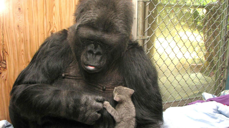 Koko et son chat Ms. Gray en 2016.
