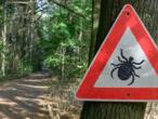 Maladie de Lyme : le Pentagone sommé de s'expliquer sur une théorie du complot