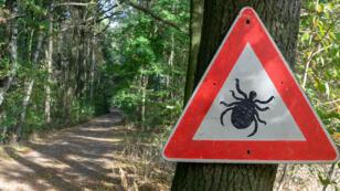 Il y a environ 300 000 cas de maladie de Lyme aux États-Unis