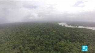 2019-11-19 13:41 New report shows spike in illegal logging, fires in Brazil's rainforest