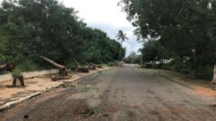 Des arbres couchés à Pemba, au Mozambique, après le passage du cyclone Kenneth, le 25 avril 2019.