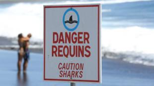 Un panneau pour prévenir les nageurs de la présence de requins à La Réunion, en octobre 2013