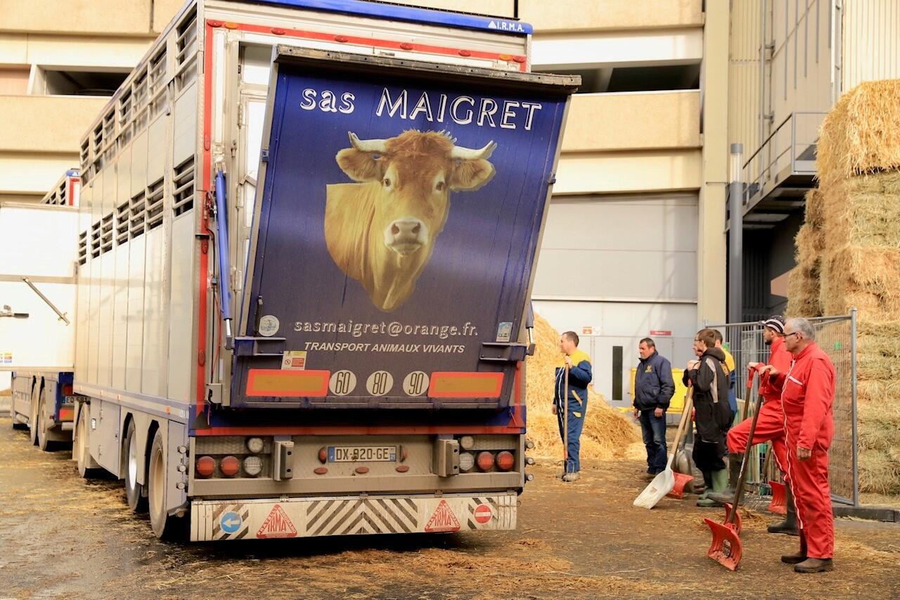 Les vaches sont arrivées en bétaillère vendredi pour l'inauguration du Salon de l'agriculture, samedi 22 février.