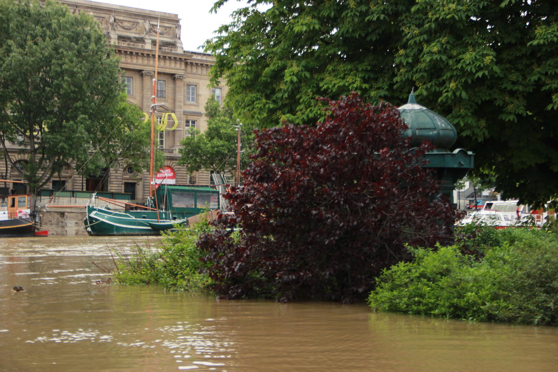 The Square du Vert-Galant on the west end of Ile de la Cité was completely underwater.