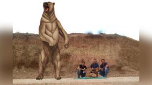 En posición erguida, los osos Arctotherium angustidens podían alcanzar hasta 4,5 metros de altura.