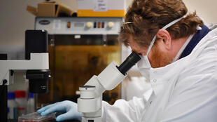 Un científico utiliza el microscopio para ver unas celulas que contienen el nuevo coronavirus SARS-CoV-2 el 15 de mayo de 2020 en un laboratorio en Burgess Hill, Reino Unido