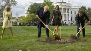 French President Emmanuel Macron offered a young oak to his US counterpart Donald Trump on the occasion of a state visit to Washington in 2018, and the two shoveled dirt around it under the watchful eyes of their wives -- and cameras from around the world