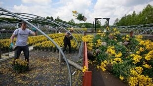 Staff at the Bransford Webbs Plant Company dispose of plants