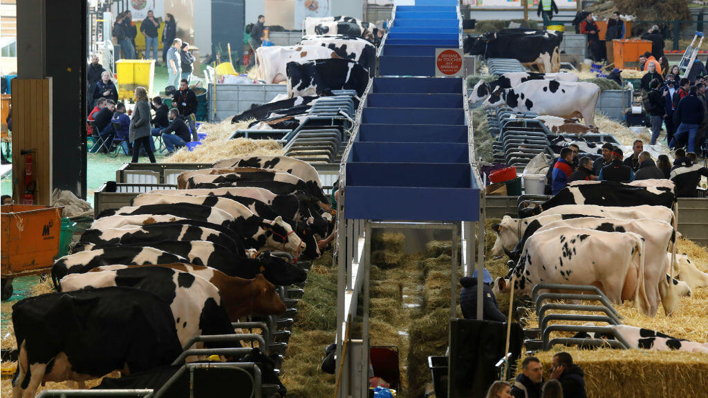 Cows stand in their stalls on the eve of the opening of the 2020 Paris International Agricultural Show in Paris, France, February 21, 2020.