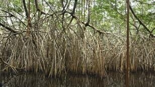 Wetlands are being lost three times faster than forests, and the impact on accelerating climate change could be devastating, the Ramsar Convention has warned