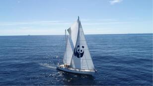 Depuis le début du mois de juillet, le voilier Blue Panda du WWF sillone la mer Méditerranée.