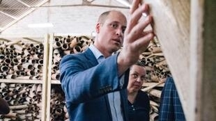 Britain's Prince William joined US and other officials to call for a crackdown on wildlife trafficking