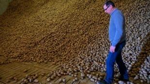 Christophe Delebarre, producteur de pommes de terre dans le Nord, devant son stock invendu le 15 mai 2020