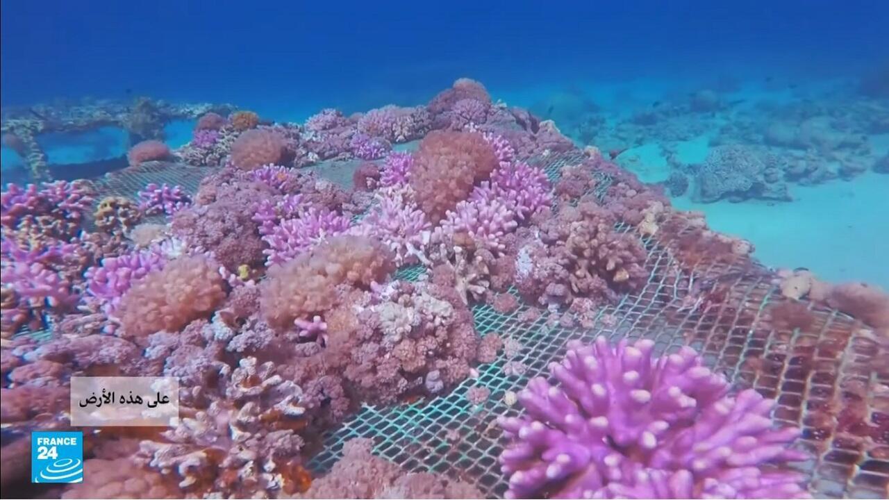 على هذه الأرض فرانس24 الأردن خليج العقبة المرجان