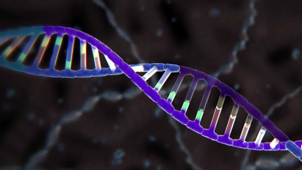 Crispr est une technique de découpage génétique : un enzyme (le Cas9) sert de ciseaux pour altérer un gène visé.