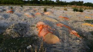 Des victimes du Covid abandonnées dans des tombes à peine creusées dans le sable, sur les bords du Gange à  Unnao, en Inde, le 13 mai 2021