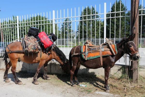 Les marcheurs sont accompagnés par un cheval et un âne.