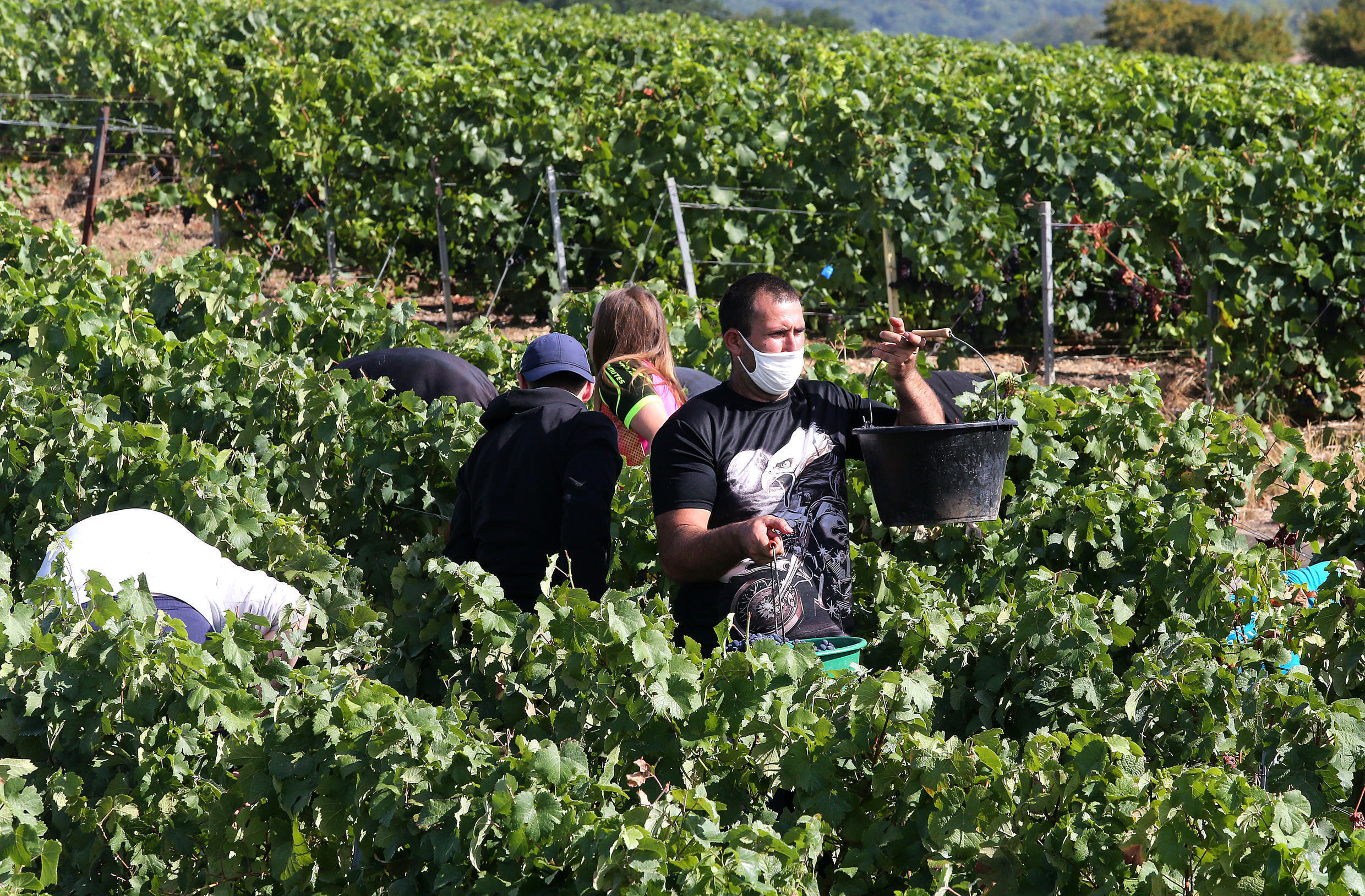 Winegrowers in Avenay-Val-d'Or, in France's Champagne region, pictured in August 2020.