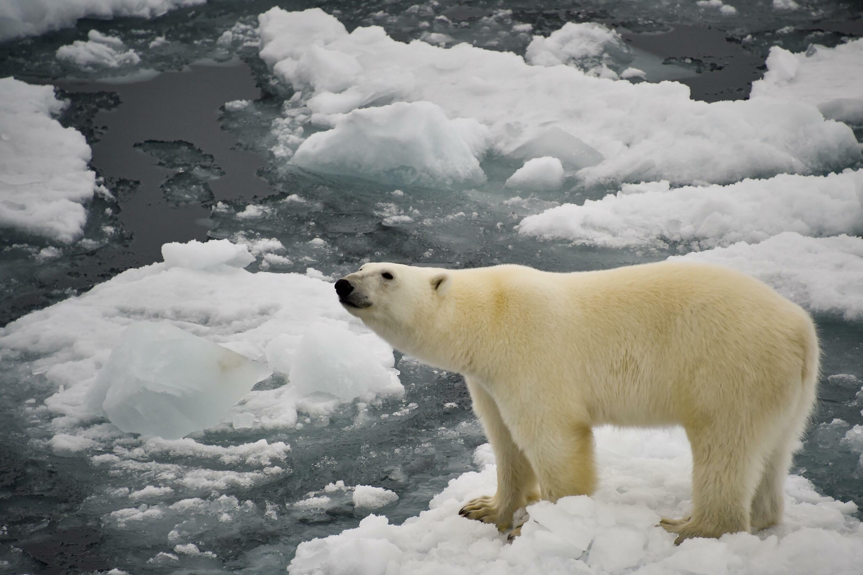 Alrededor de un millón de especies de animales y plantas enfrentan peligro de extinción en el planeta