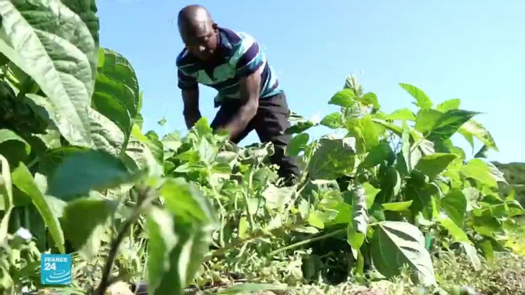 مهاجرون يخلقون مشروعا ينتج اللبن ومواد فلاحية