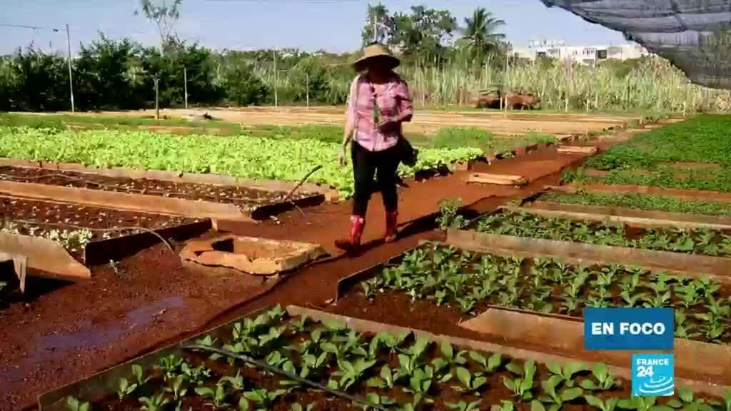 En foco Cuba agricultura