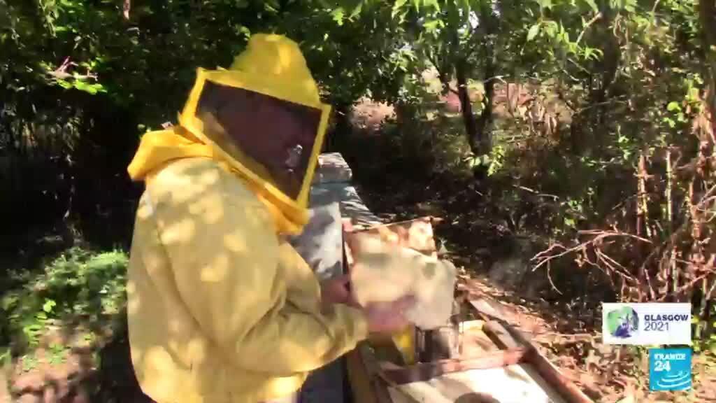 2021-10-25 08:12 Sécheresse en Sicile : le cri d'alerte des apiculteurs à l'heure de la COP26