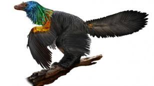 Le dinosaure Caijong retrouvé en Chine.