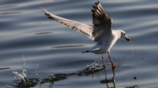 Los investigadores de la Alianza Mundial de Científicos señalaron que en los últimos años se registró una reducción del 29% en el número de aves, peces, anfibios y mamíferos.