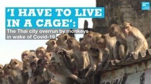 EN vignette thai monkeys