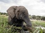 """Conférence de la Cites : mobilisation contre l'extinction """"sans précédent"""" des espèces"""