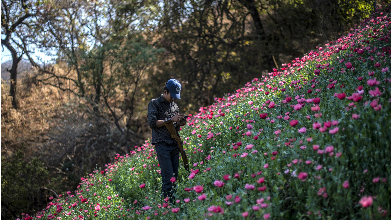 Un miembro de la Policía Comunitaria de Guerrero mira su teléfono móvil mientras hace guardia en un campo ilegal de amapolas, en Heliodoro Castillo, Estado de Guerrero, México, el 25 de marzo de 2018.