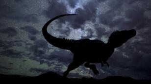 Le Kayentapus ambrokholohali appartient au groupe des méga-théropodes, comme le Tyrannosaure rex (image d'illustration).