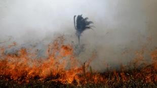 Las llamas continúan arrasando parte de la Amazonía brasileña en el municipio de Porto Velho. 24 de agosto de 2019.