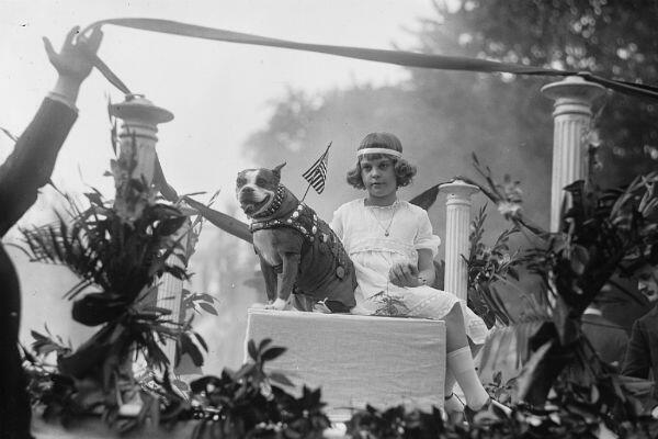 Le sergent Stubby lors d'une parade aux Etats-Unis en mai 1921