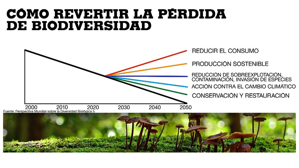 Con esfuerzos conjuntos en varias áreas será posible revertir la curva del descenso de la biodiversidad