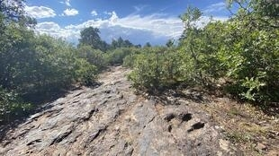 Une empreinte de dinosaure fossilisée dans la forêt nationale de Manti-La Sal, dans l'Utah aux Etats-Unis, le 14 juillet 2020