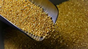 Archivo: Un empleado toma gránulos de 99,99% de oro puro en la planta de metales no ferrosos Krastsvetmet, uno de los mayores productores mundiales de la industria de metales preciosos, en la ciudad siberiana de Krasnoyarsk, Rusia, 22 de noviembre de 2018.