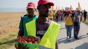 عامل مهاجر يحمل سلة طماطم خلال مسيرة قرب فودجا في 8 آب/أغسطس 2018 خرجت بعد وفاة 16 عاملا مهاجرا في حادثي سير