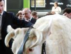 Paris Agriculture Fair: Where cows, pigs and politicians strut their stuff