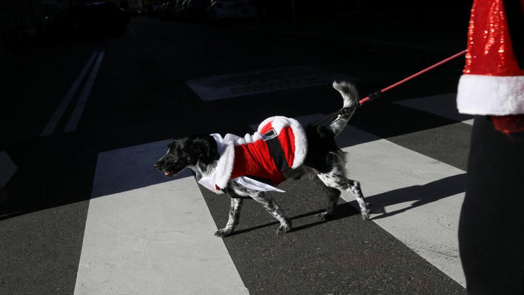 El Fashion Show de Los Realejos abre este sábado con una pasarela de adopción de mascotas