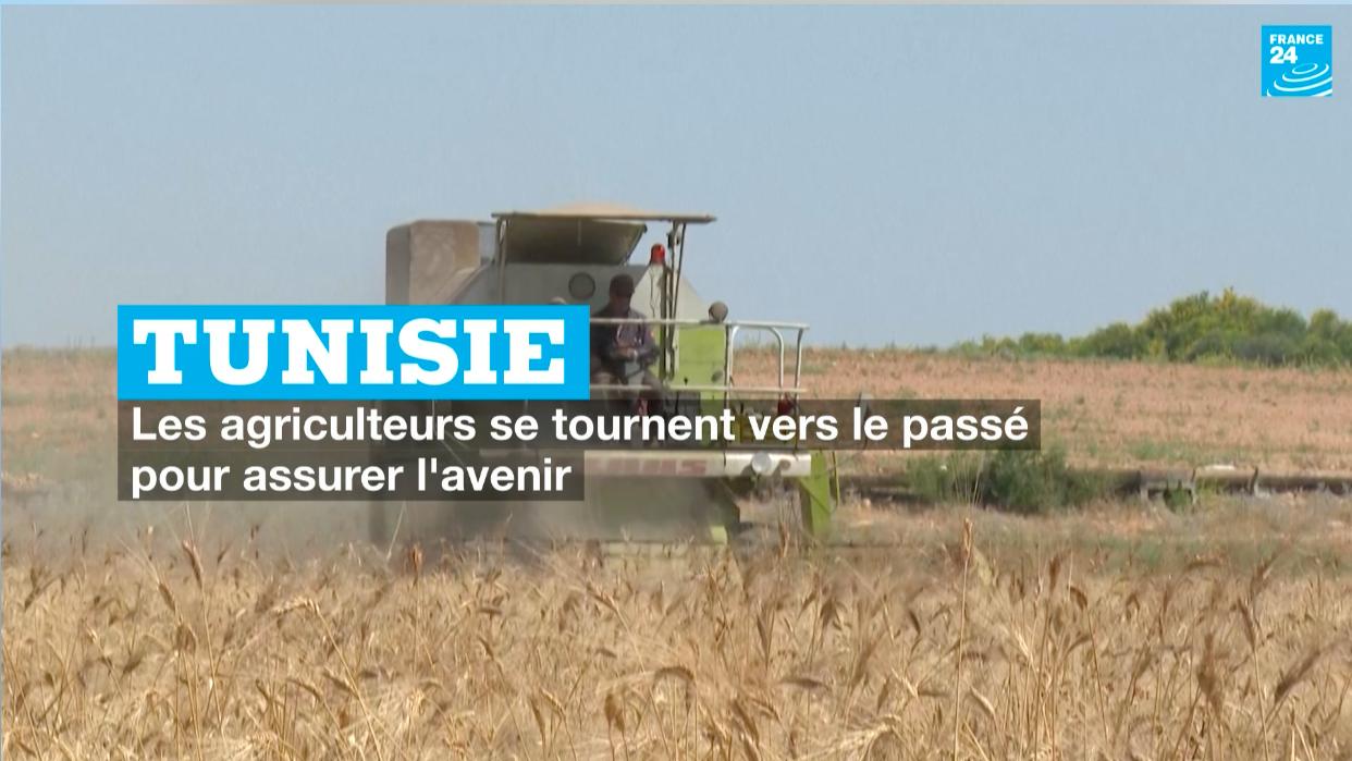 Tunisie - les agriculteurs se tournent vers le passé pour assurer l'avenir