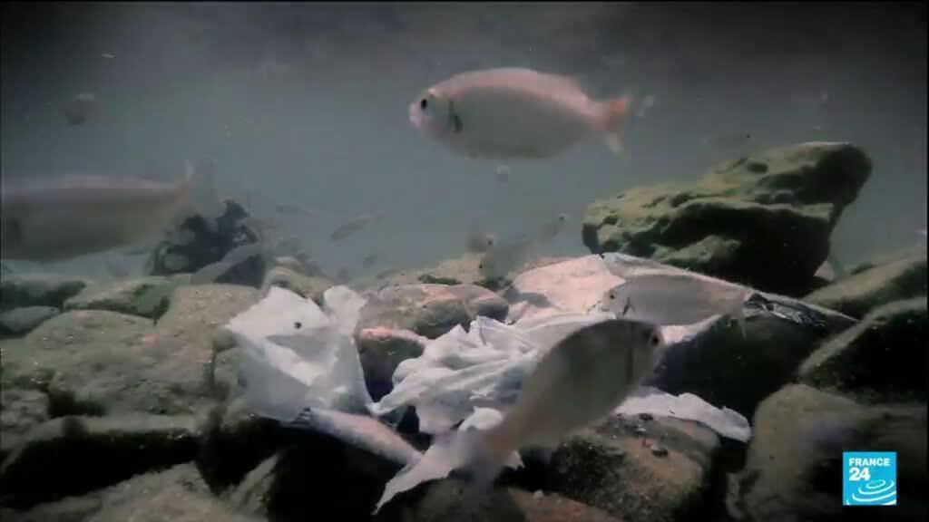 2021-09-03 17:08 Plastic pollution: the scourge in the Mediterranean Sea