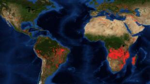 """La forêt du bassin du Congo est communément comparée au """"deuxième poumon vert"""" de la planète, après l'Amazonie."""