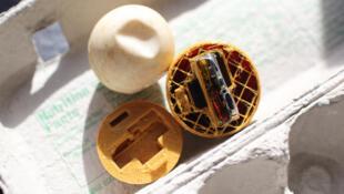 بيض مصنوع بالطباعة ثلاثية الأبعاد لتعقب تجار بيض السلاحف البحرية